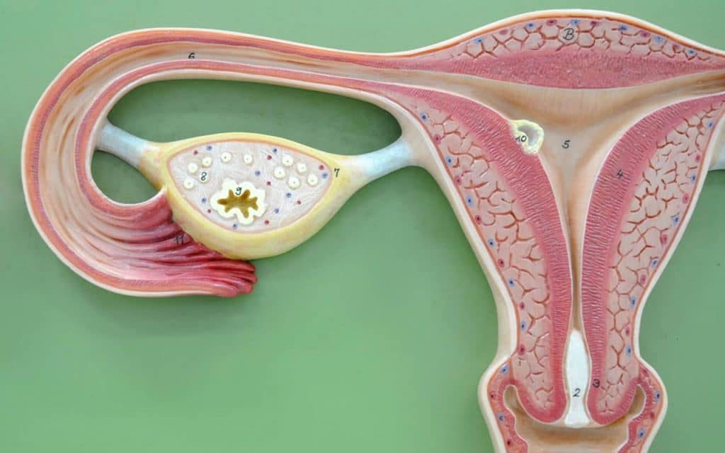 ovarian cyst research paper Scientists continue to study the genes responsible for familial ovarian cancer this research is beginning to yield clues about how these genes normally work and how disrupting their action can lead to cancer this information eventually is expected to lead to new drugs for preventing and treating.