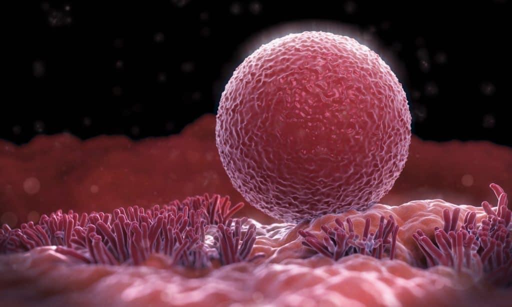 Препарат подготавливает матку для яйцеклетки