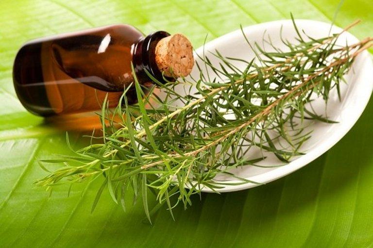 Масло чайного дерева в гинекологии